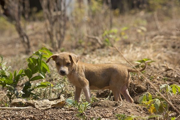 Dogs - The Forgotten Casualties of Sierra Leone's Civil War