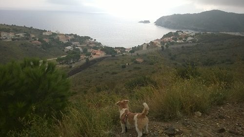 What You Need to Know About Spain If You're Planning on Visiting with Your Dog