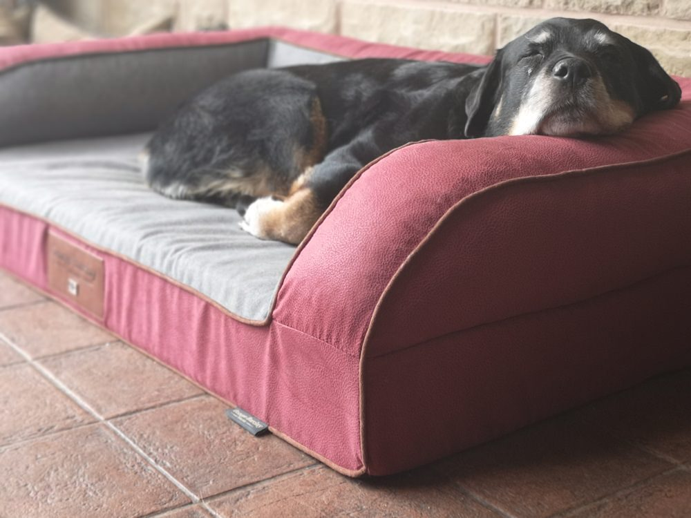 This Dog Bed Brand Has Fast Become a Favourite With Our Dogs