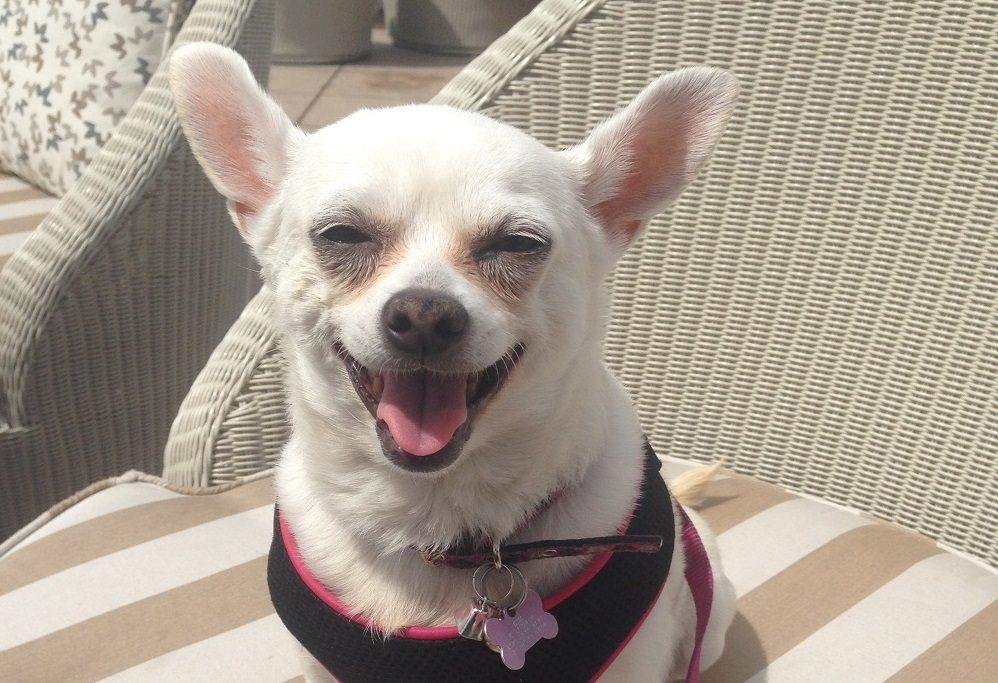 How a 10 Pound Chihuahua Saved My Life