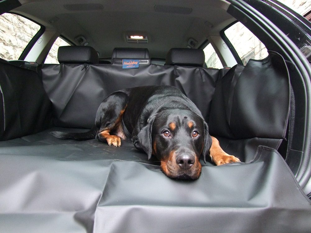 If You're Looking to Get out & About With Your Dog, You Might Need This