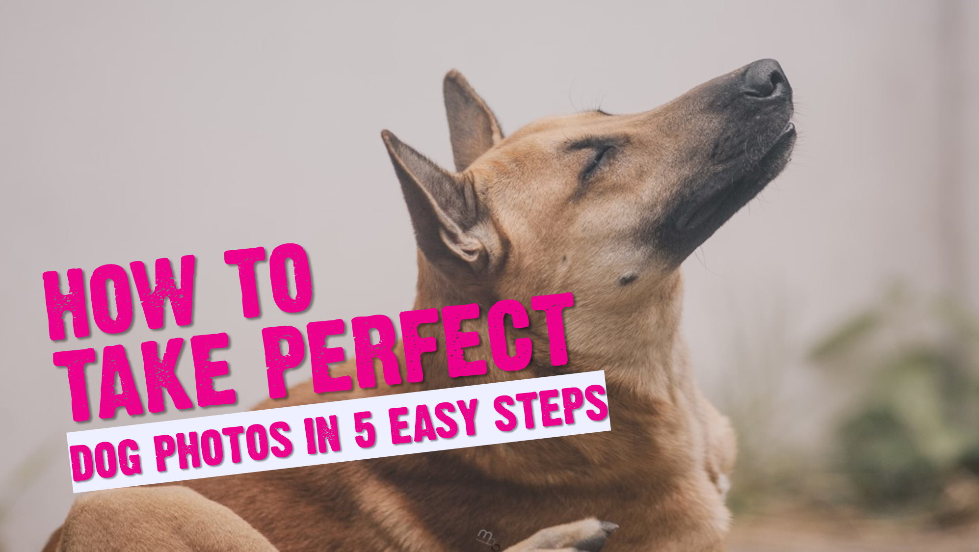 How to Take Amazing Dog Photographs in 5 Simple Steps