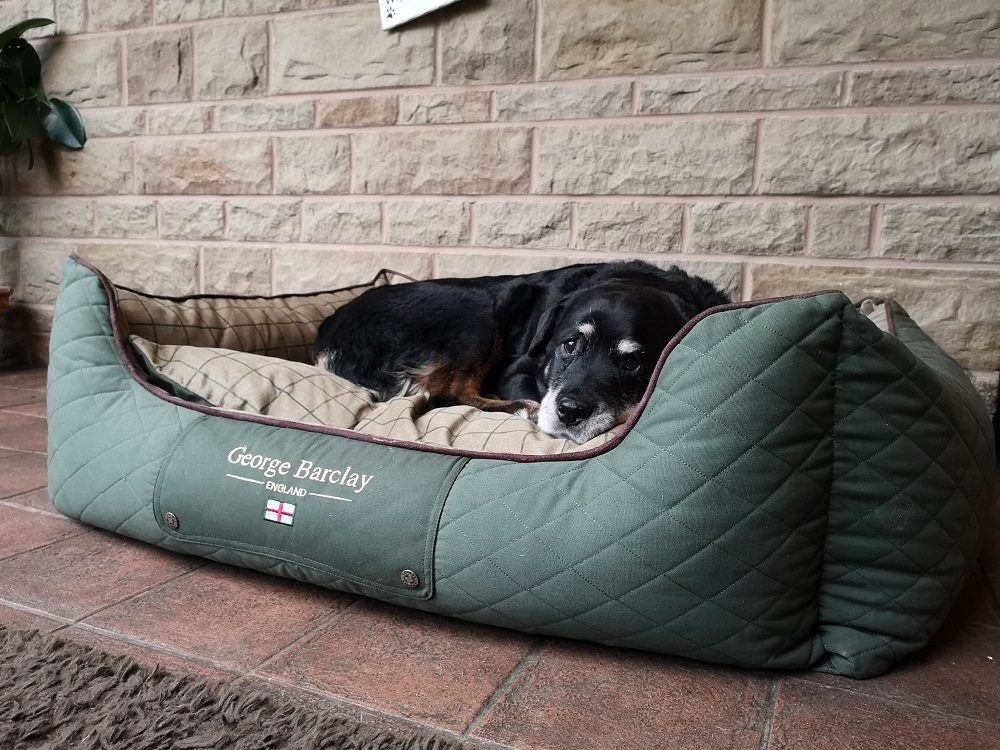 How Many Quirks Does Your Dog Have? This Bed Review Highlighted Ours!