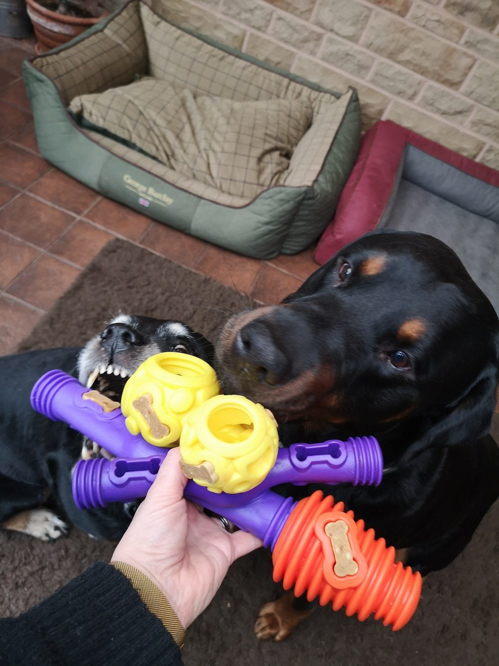 K9 Connectables Review: We Put the Interactive Dog Toys to the Test