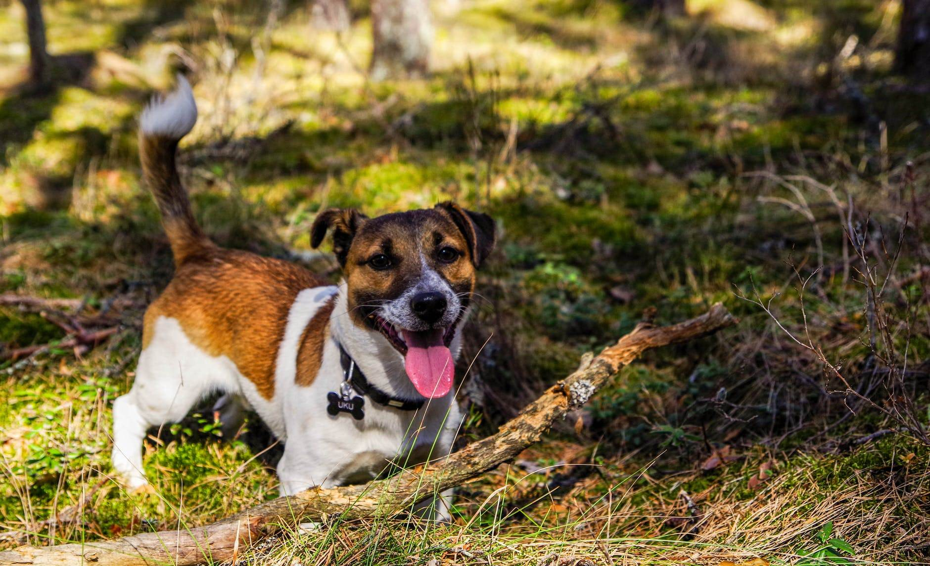 Vets Find New Way to Spot Liver Disease in Dogs