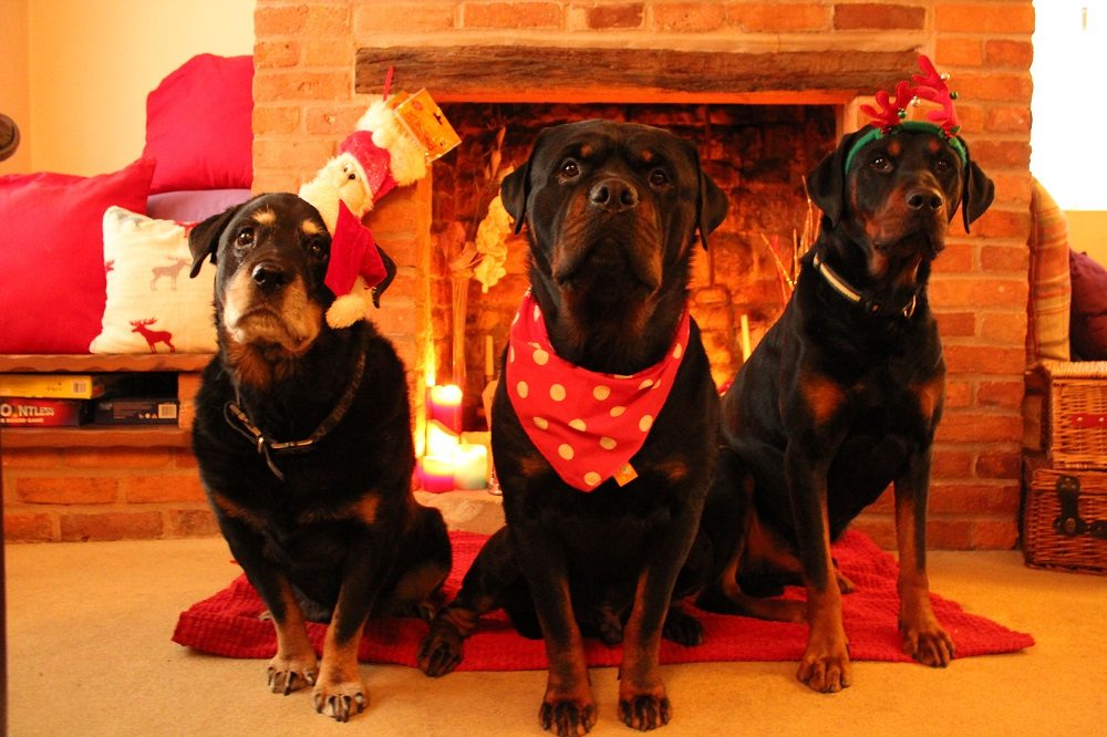 7 Products We Think Will Be on Your Dog's Wish List This Xmas