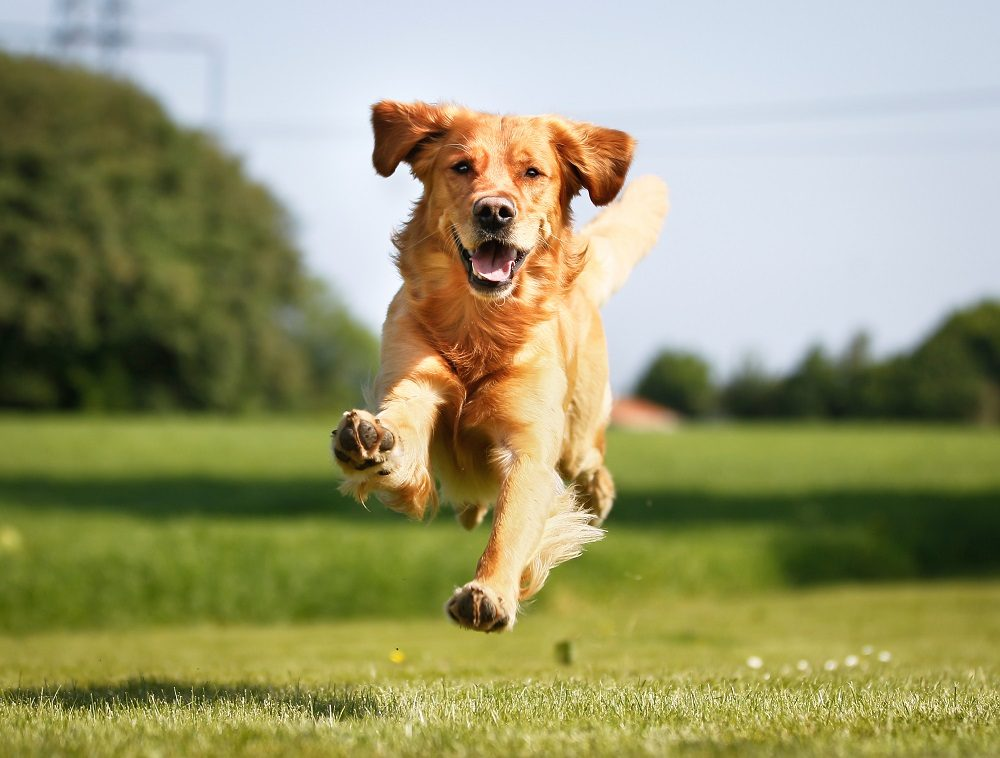 Extend Your Dog's Life: 100 Ways To Help Your Dog Live Longer