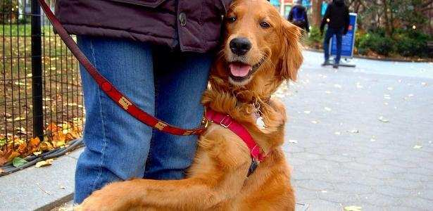 The Hugging Dog of NYC: Here's What You Need to Know in Her Owner's Words