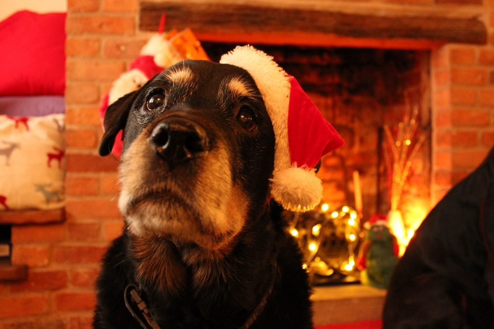 Christmas Dinner Menu for Dogs: How to Prepare a Simple Lunch Your Dog Will Love