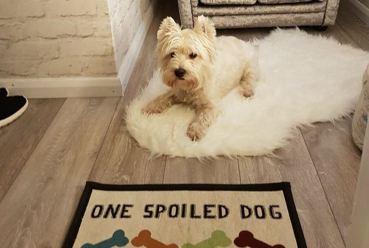 This Dog Owner Built His Dog Her Own Room in the House