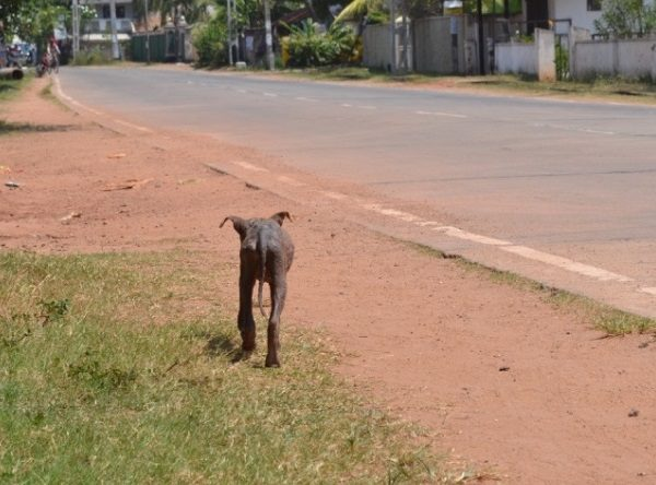 Has One Organisation Found the Key to Solving Sri Lanka's Street Dog Problem?