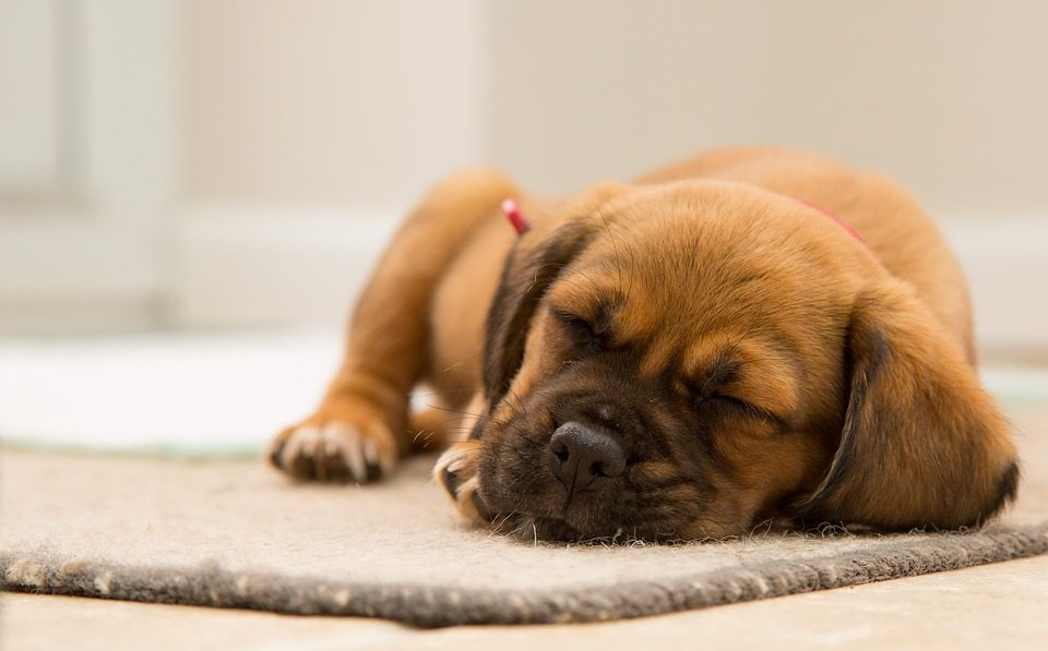 Are These 4 of THE Best Products for Puppies? We Think So!