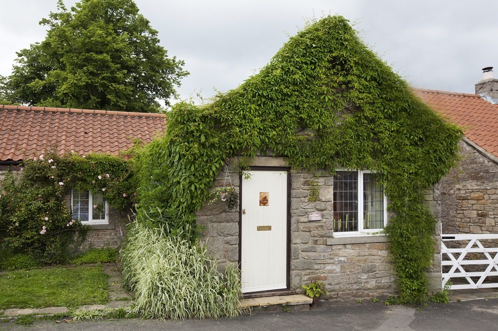 Rokerby Cottage Review: A Dog Lover's Guide to the Pennines