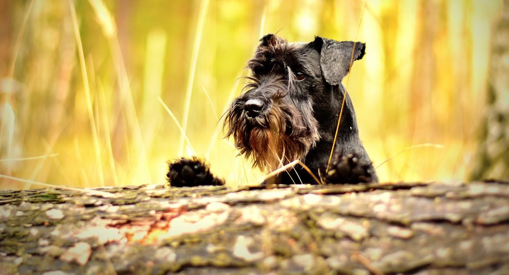 What Is Alabama Rot?