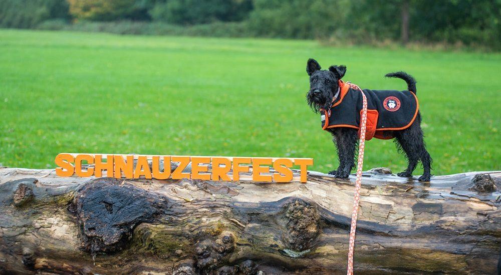 What Is Schnauzerfest?