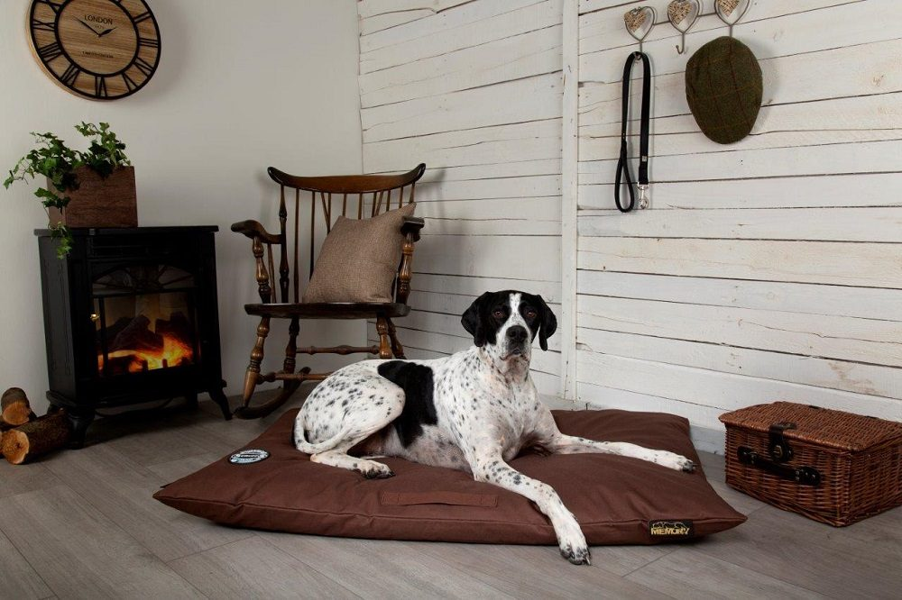 4 Essential Dog Products for Spring