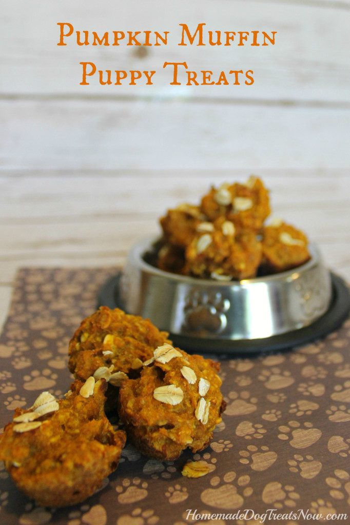 Treat Your Dog This Halloween: 3 Easy Pumpkin Recipes Your Dog Will Love!