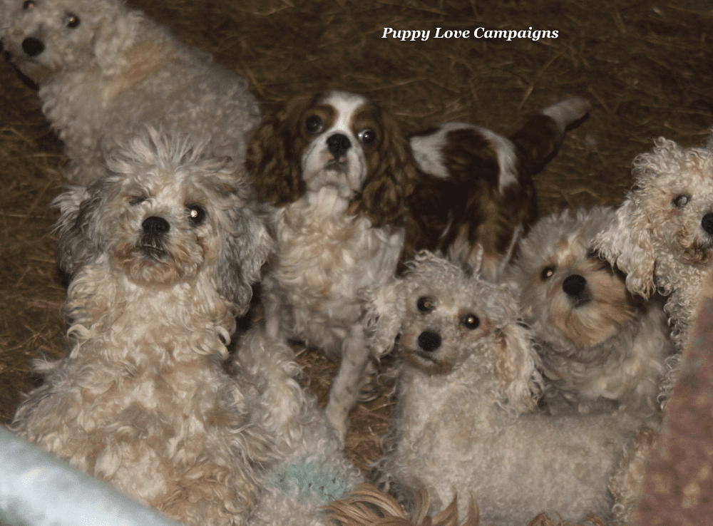 'I Went Undercover to Stop Puppy Farming'