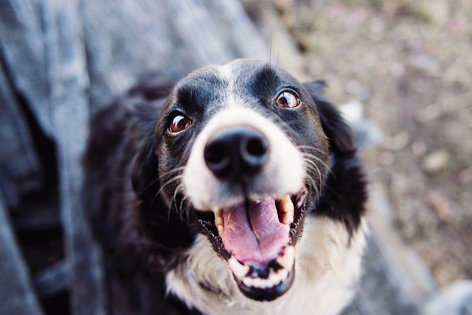 Why You Shouldn't Use A Dog Trainer (Yet)