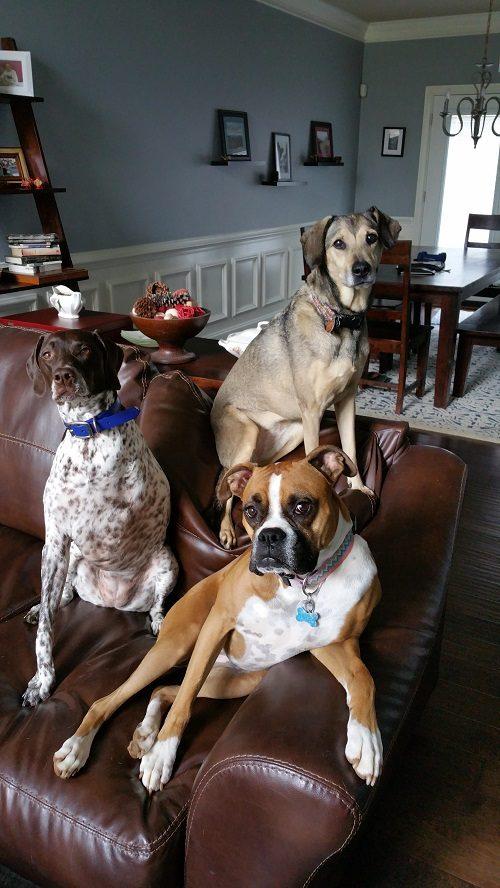 15 Dog Photographs Guaranteed to Make You Smile