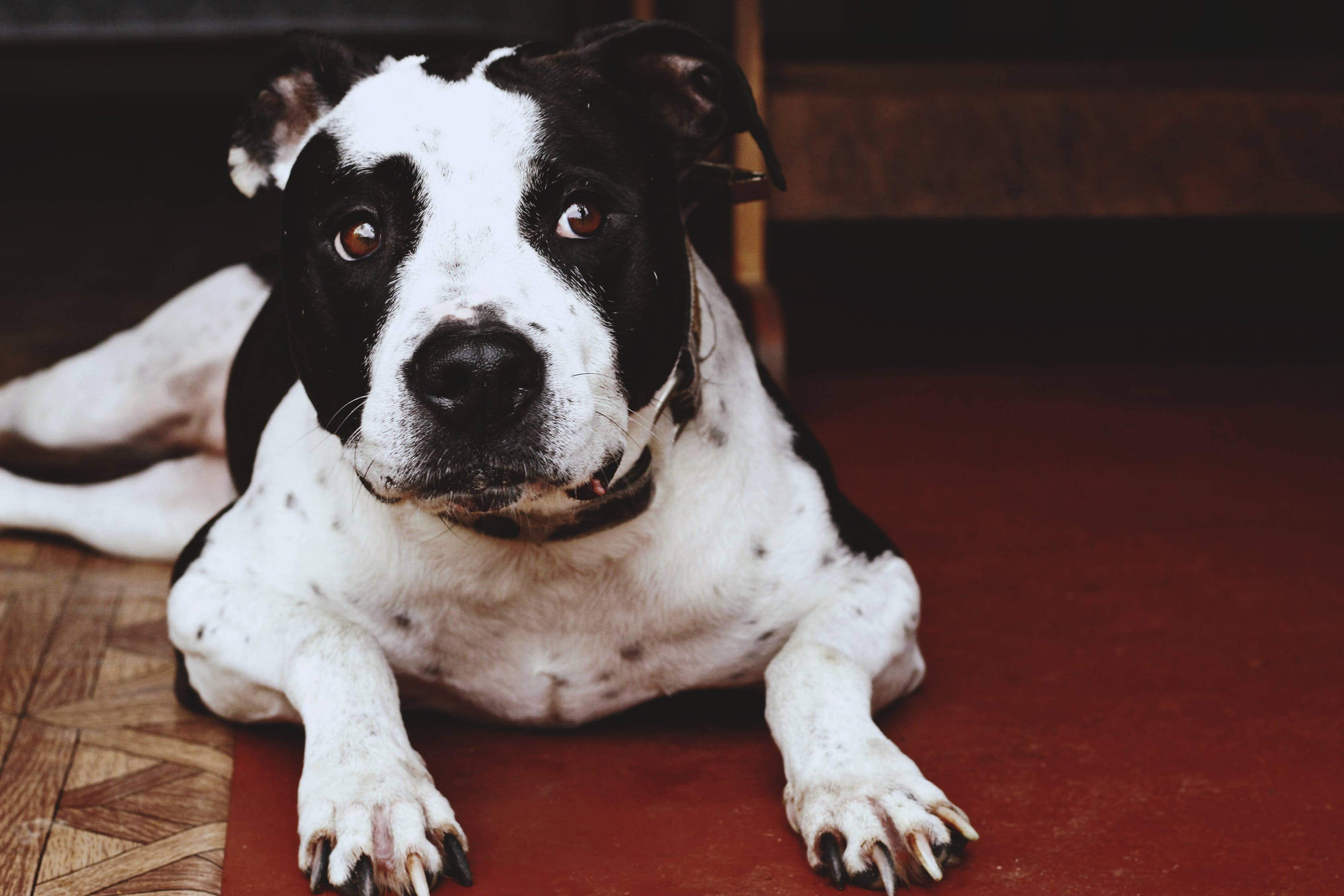 Why Breed Specific Legislation Has Failed