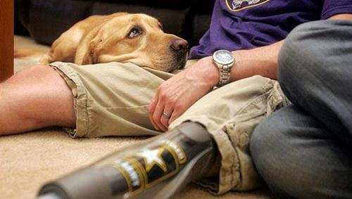 Real Life: How Service Dogs are Making a Difference to US Veterans