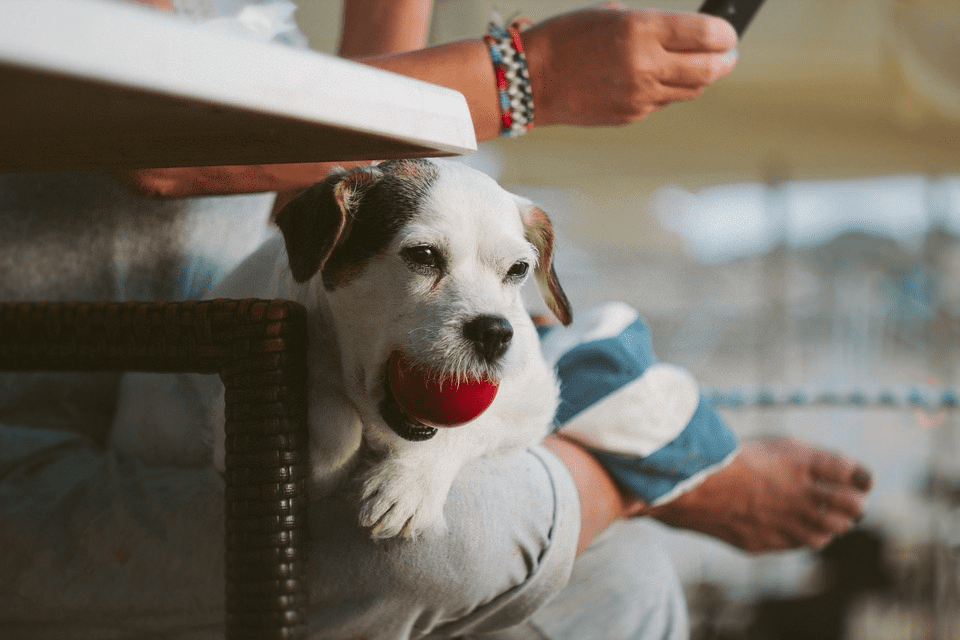 How Dogs Are Helping Scientists Learn More About Breast Cancer