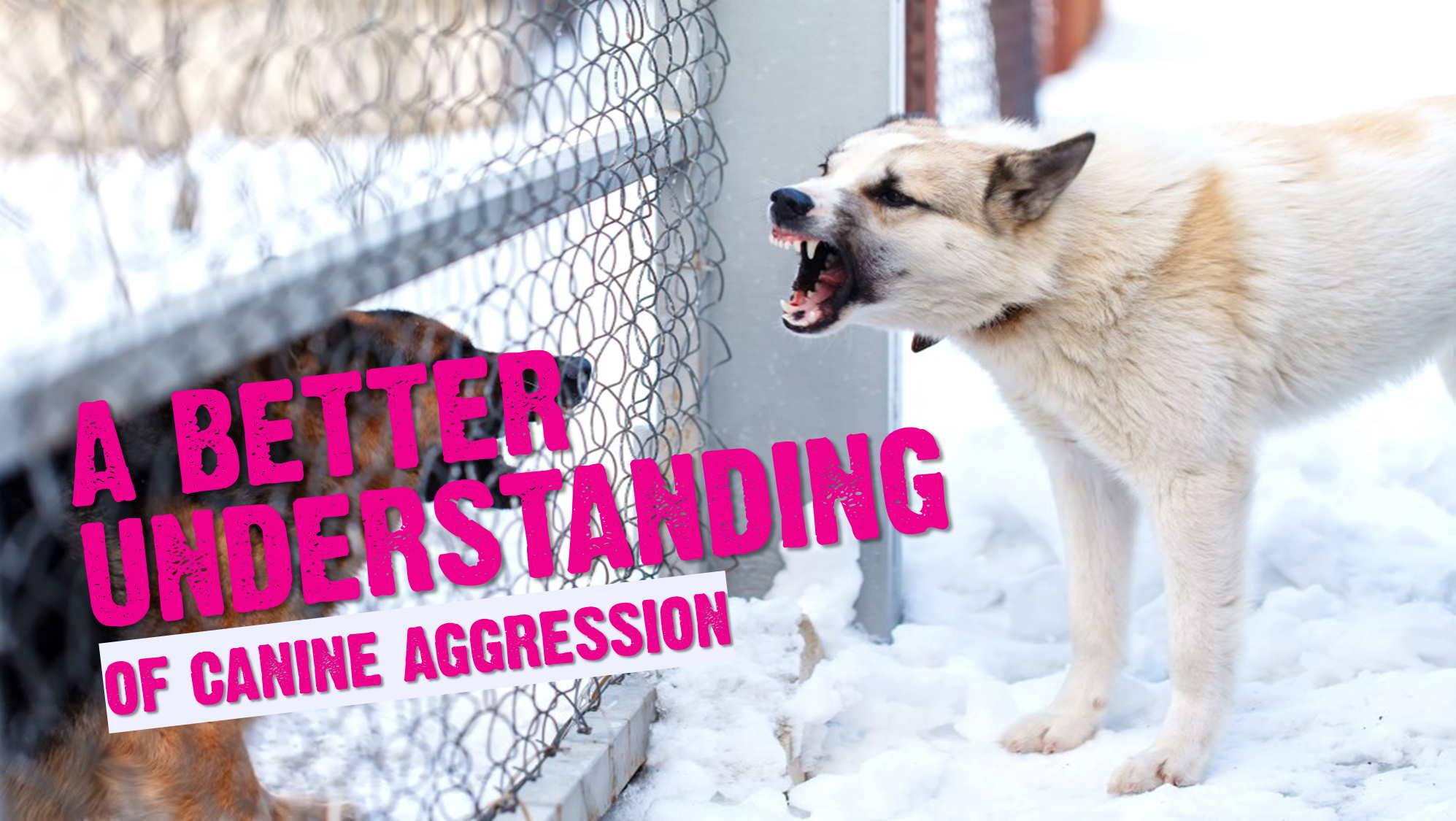 A Better Understanding of Animal Aggression