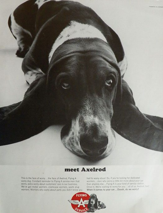 These 5 Dogs Are Taking the Advertising World by Storm