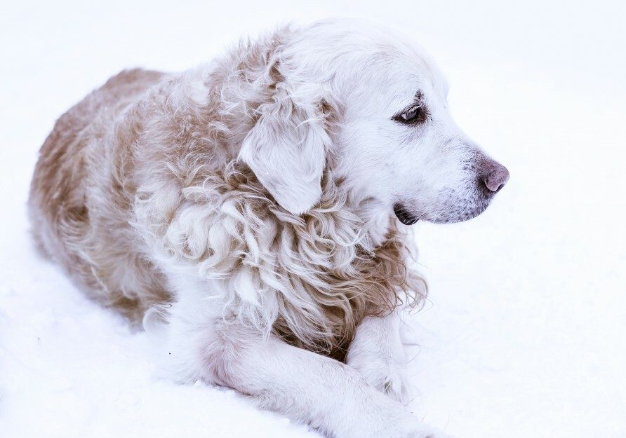 IBD In Dogs (All You Need To Know)
