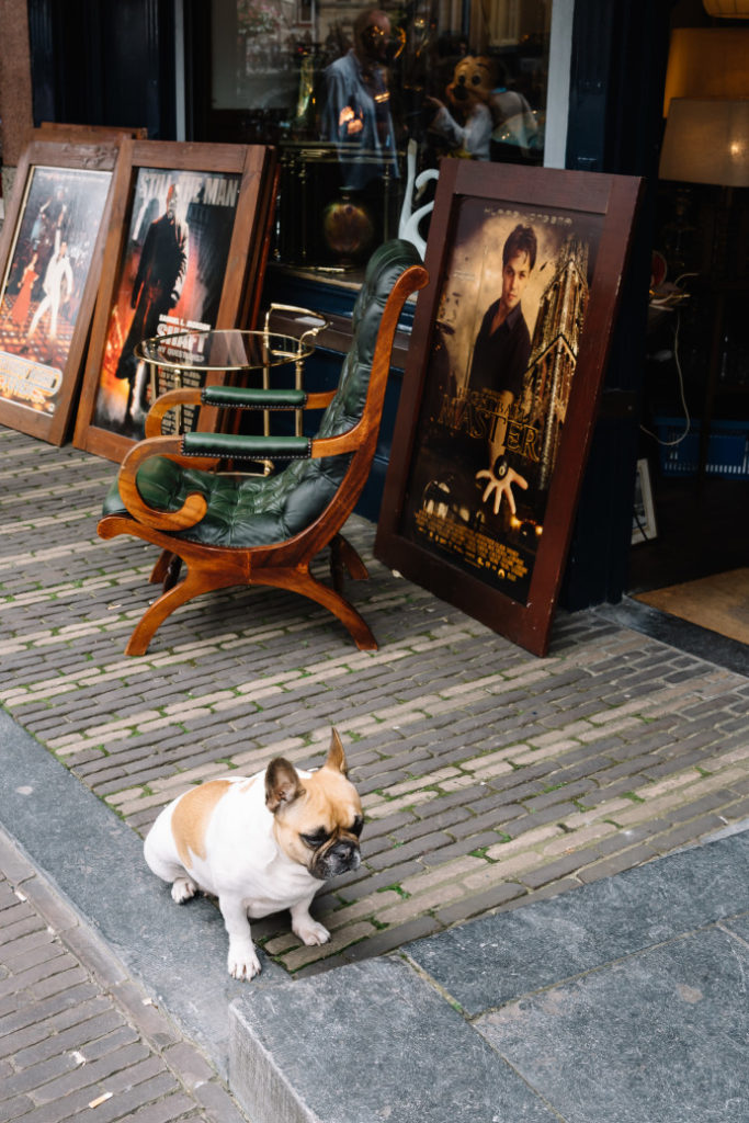 Our Friend The Dog, The World's Greatest Salesman?