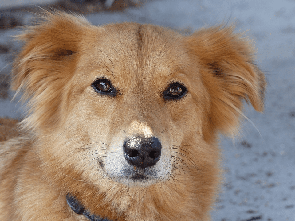 If Your Dog Has Bone Cancer, High Cholesterol Could Help Them to Survive