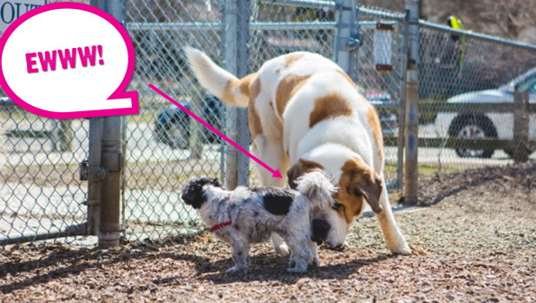 These Are The 5 Dog Habits Owners Dislike The Most