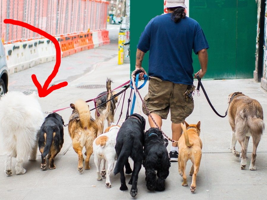 Important Questions To Ask Before Hiring A Professional Dog Walker