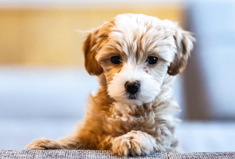 bringing home new puppy