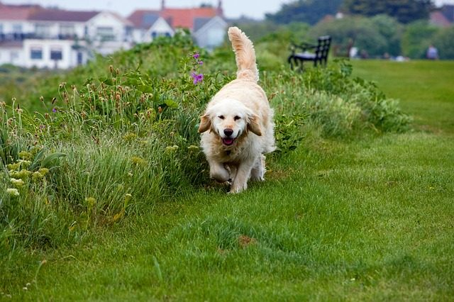 22 Golden Dog Training Rules Every Owner Should Know