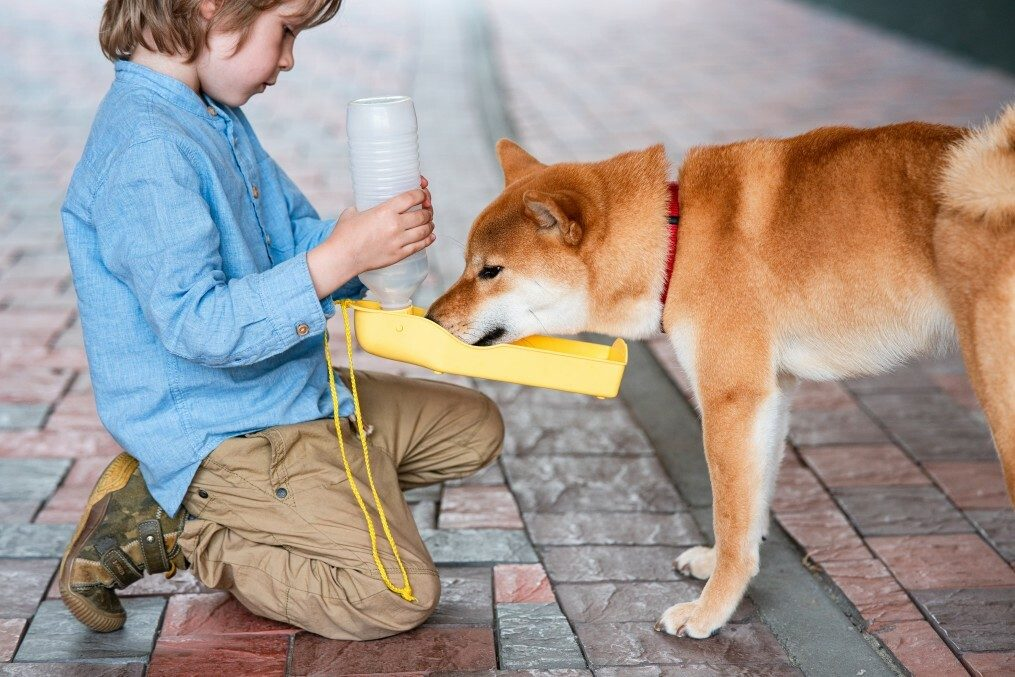 What Water Is Best For Dogs (Tap, Bottled Or Spring)?