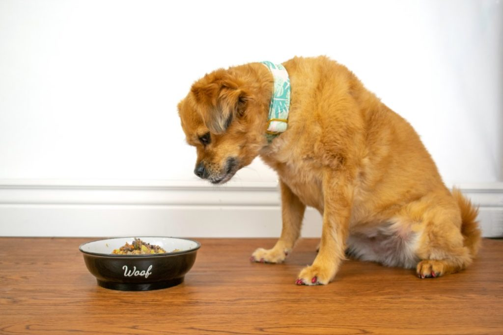 Simple Ways To Improve Your Dog's Gut Health