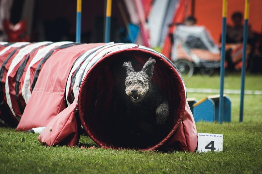 A Day in the Life of an Agility Dog