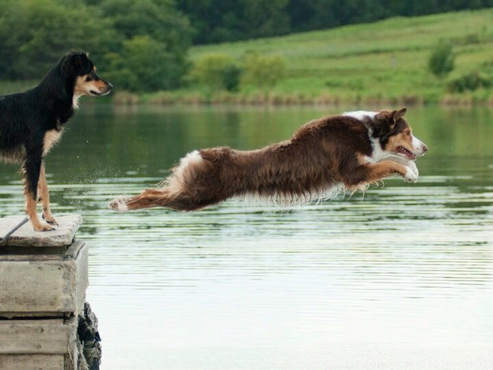 The Ultimate Guide To Canine Mobility & Dog Joint Care