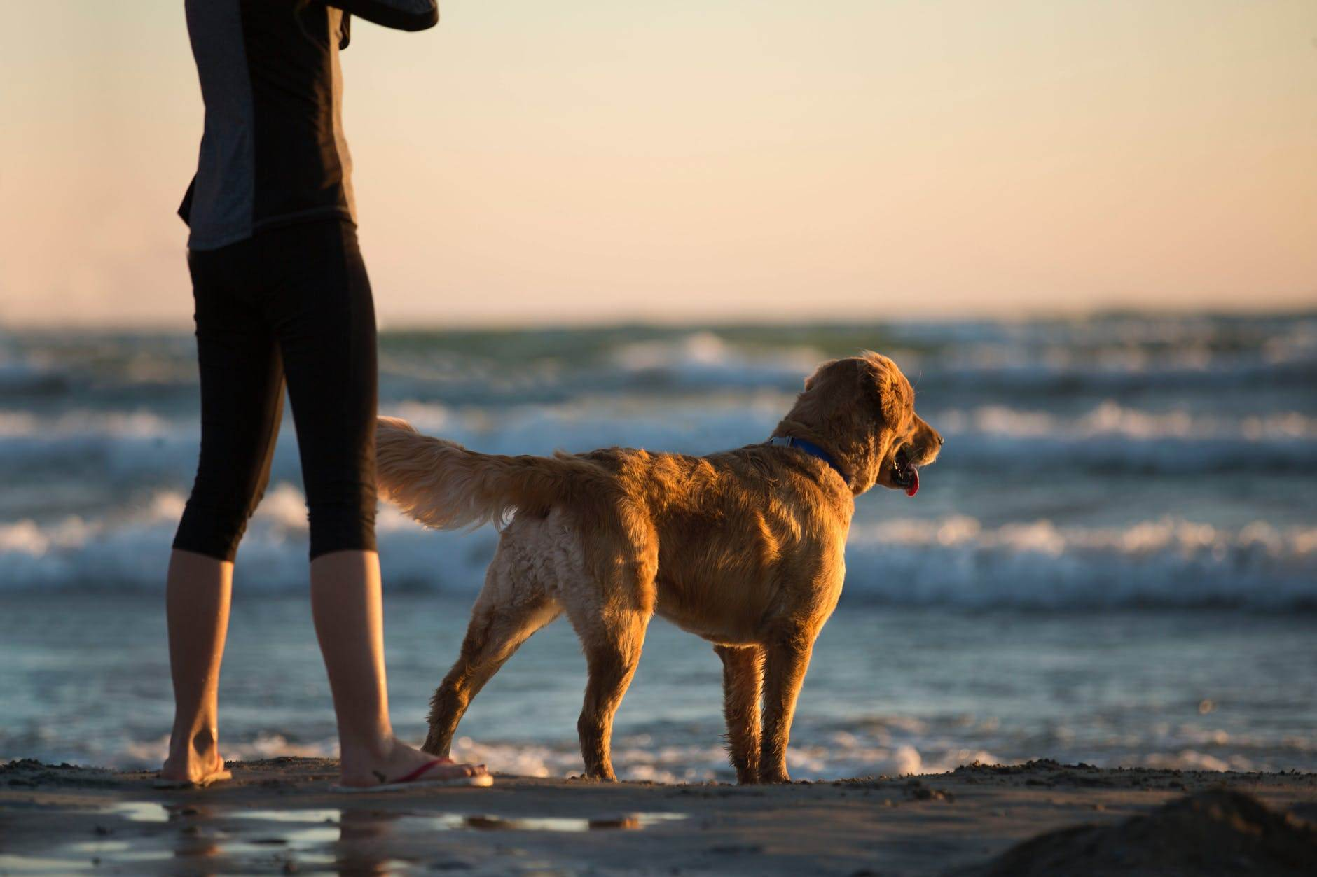 10 Best Places to Holiday in the UK With Your Dog