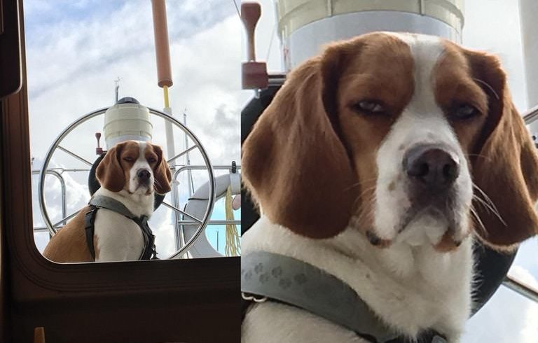 Risk vs Reward: 3 Dogs With Decisions to Make