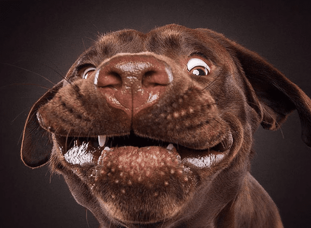 This Photographer Decided to Do Something Different to Capture Dogs Faces