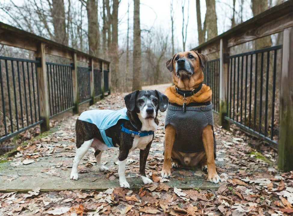 How to Make a Living Taking Photos of Dogs