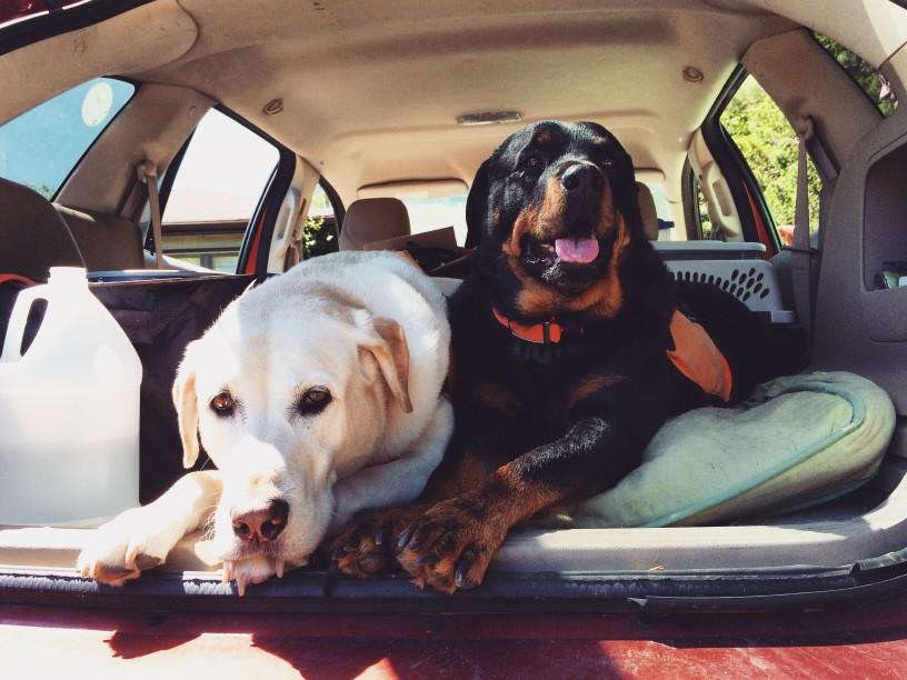 5 Ways to Prevent Dog Heat Stroke