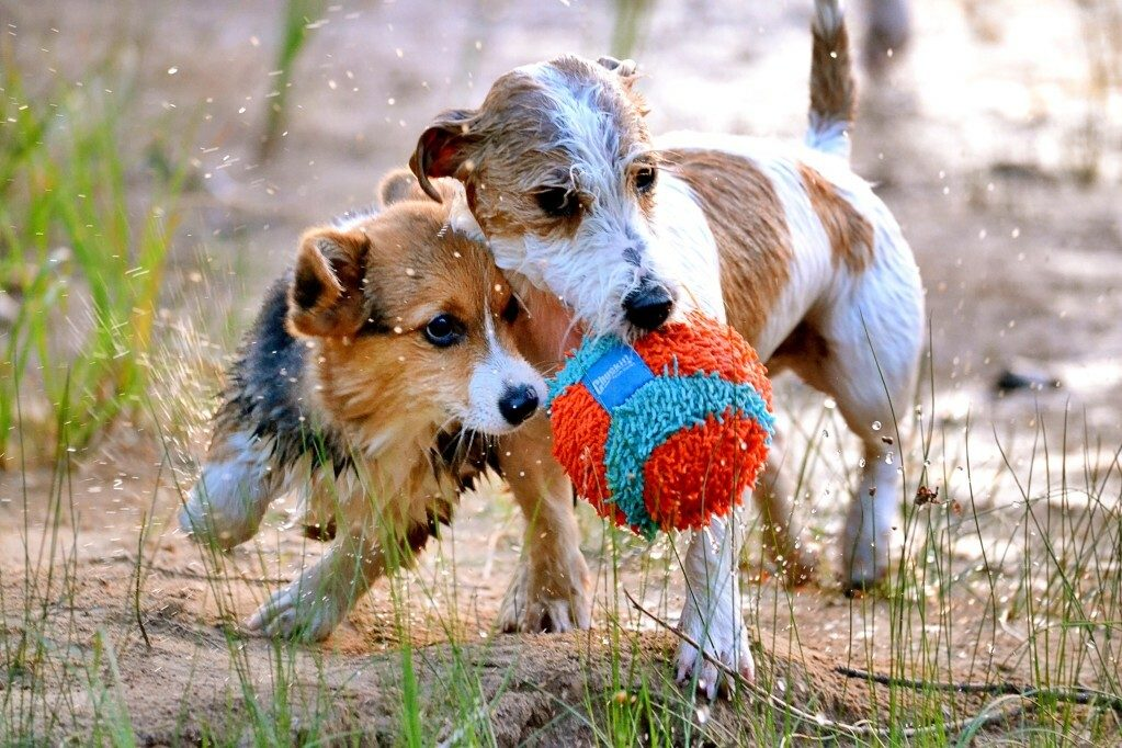 The Best Indestructible Dog Toys You Can Buy