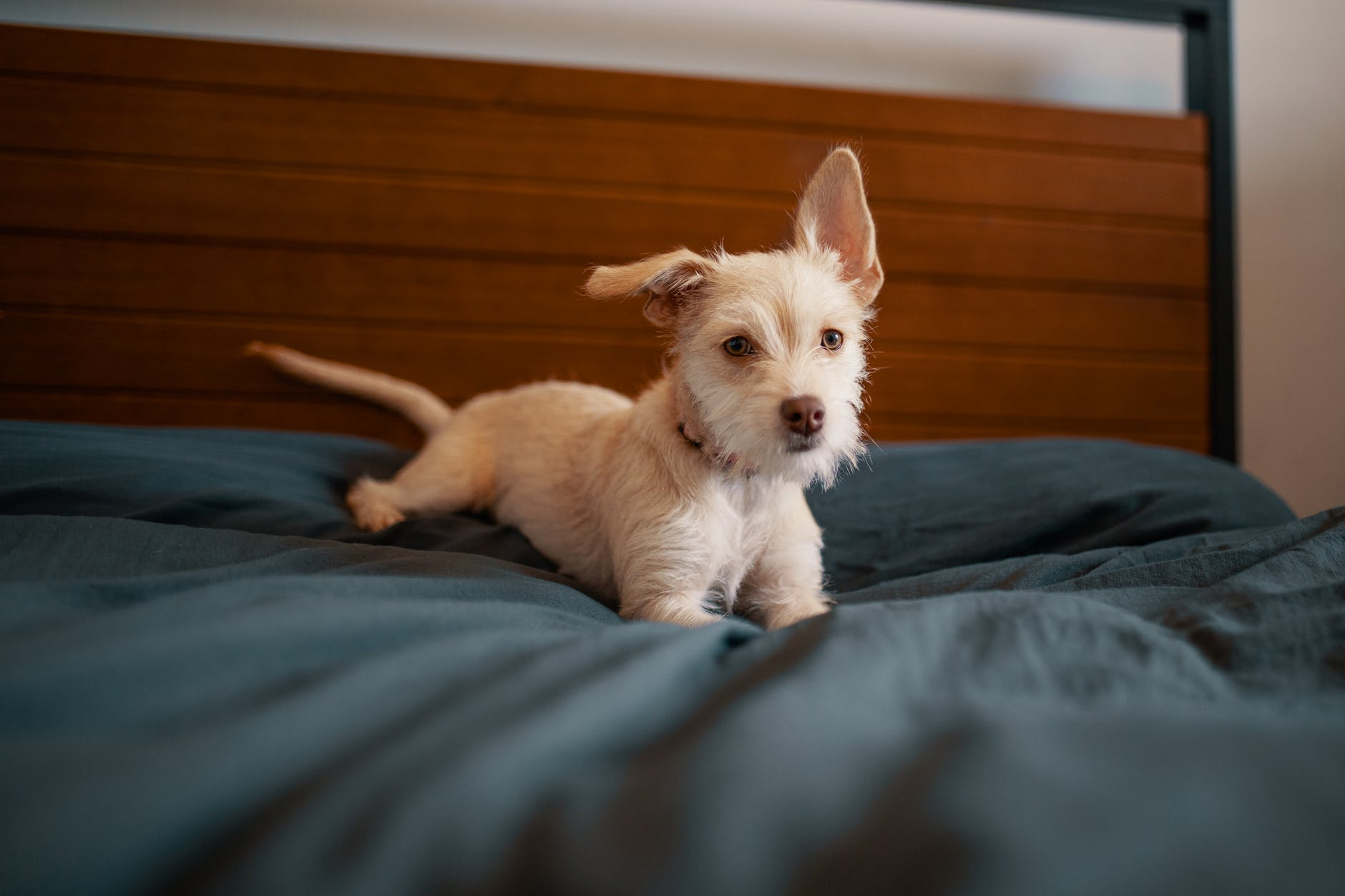 Do Dogs Understand Time? Apparently So - Here's How We Know