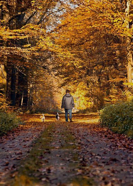 dog walk photo