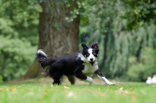 Important Things You Should Know About Your Dog's Heart (Quick Read)