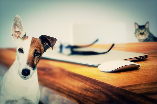 Why All Dog Owners Need to Be Tick Aware
